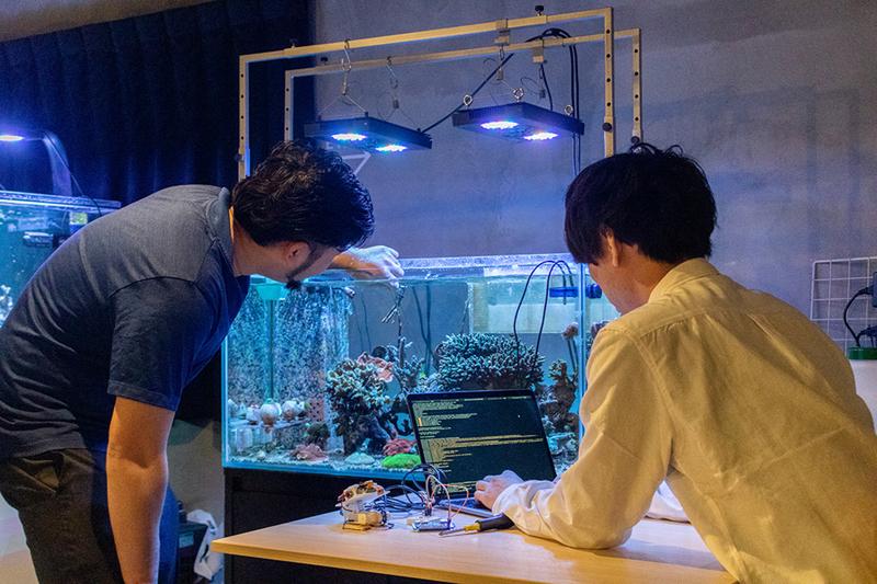 サンゴの人工抱卵