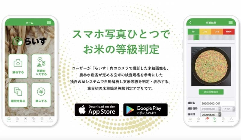 Raisu, an app for analyzing rice grain quality