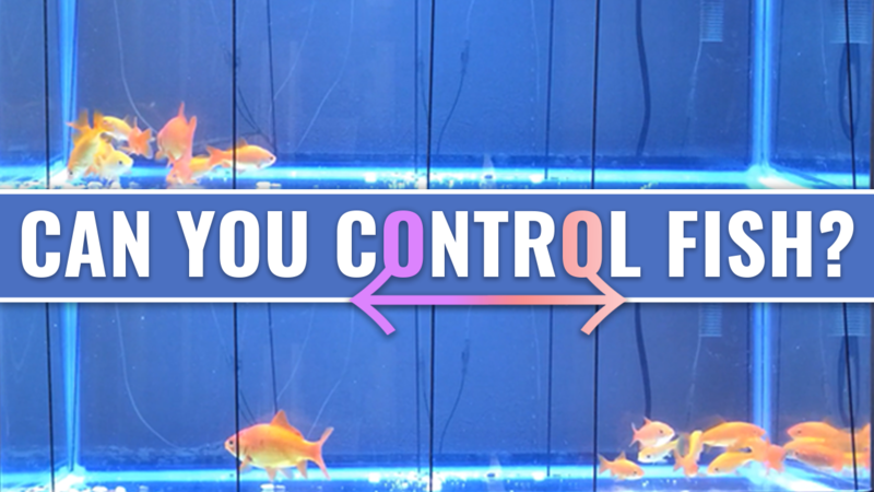 Controlling Fish Swimming Patterns