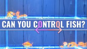 Controlling Fish Swimming Patterns